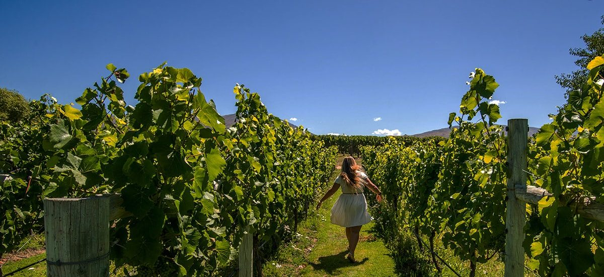 New Zealand web design for Wanaka Wine Tours by Phancybox New Zealand digital agency vineyard image